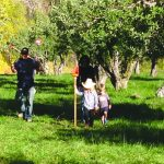 Picking Heirloom Apples at Orchard Creek Ranch 1