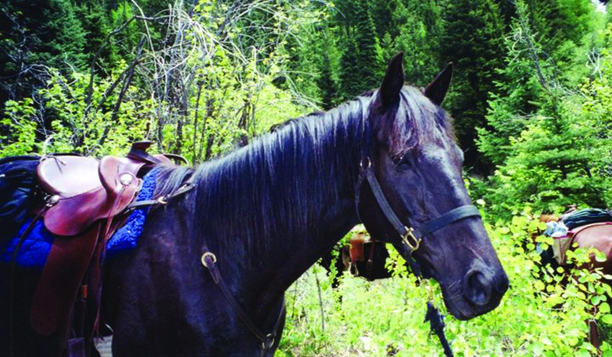 A Colorado Retirement for Rock Stars of the Racetrack 3
