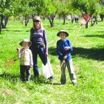 Picking Heirloom Apples at Orchard Creek Ranch 4