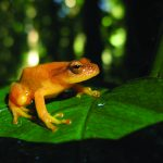Local Nonprofit Documents New Species in Mozambique 10