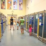 Humane Society of Missouri's Kuehner Center   4