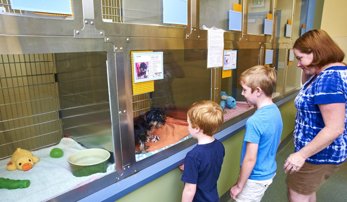 Humane Society of Missouri's Kuehner Center