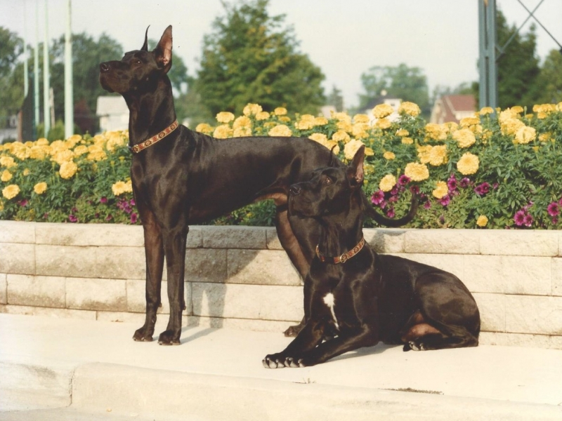 Selecting The Best Dog For You 2