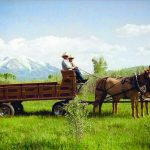 Driving Mule Teams in the Roaring Fork Valley 6