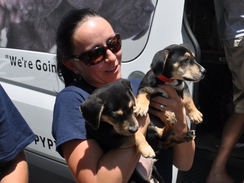 Puppy Pipeline Finds Northern Home for Southern Pups 4