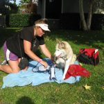 Caring For Pets And More: Animal House Pet Care 5