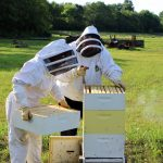 Bees find a hive in Liberty 13