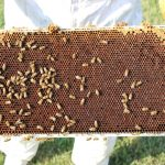 Bees find a hive in Liberty 7