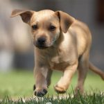 Best of Smyrna/Vinings: For Kids and Pets