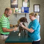 Boyer Veterinary Clinic 1