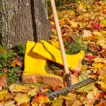 PREPARING YOUR YARD FOR WINTER 4