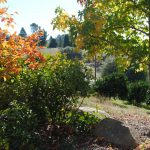 Growing the Good Life in the Gold Country 6