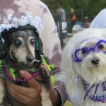 The Yappy Howl-O-Ween Pawty 3