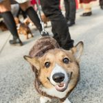 ANNUAL PETS ON PARADE BENEFITS LOCAL DOG RESCUE 6