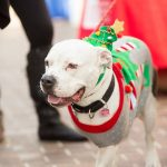 ANNUAL PETS ON PARADE BENEFITS LOCAL DOG RESCUE
