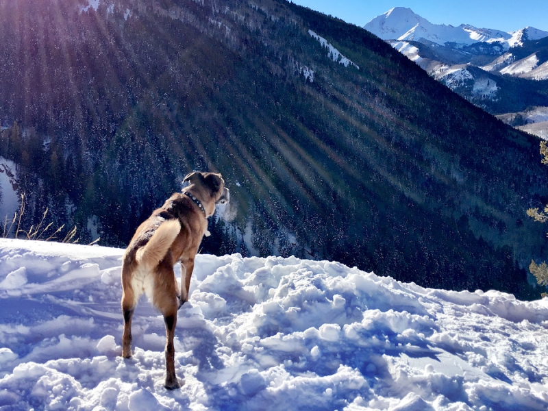 Preparing Your Dogs for Fun in the Snow 1