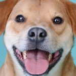 Happy Tails Of West Chester & Liberty Township 5
