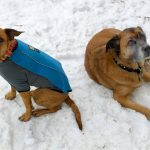 Preparing Your Dogs for Fun in the Snow