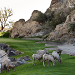 The Magnificent Seven – Courses To Play in 2017 3