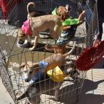 Pet Adoption day at Luxre Realty in San Clemente