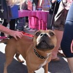 Pet Adoption day at Luxre Realty in San Clemente 3