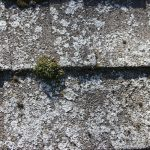 Leave Roof Cleaning to an Expert