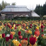 "Take a Road Trip to Visit the Biltmore Blooms and ""Designed for Drama"" 6"