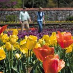 "Take a Road Trip to Visit the Biltmore Blooms and ""Designed for Drama"" 5"