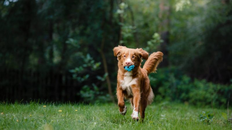 Five Tips for a Happy Life from Man's Best Friend
