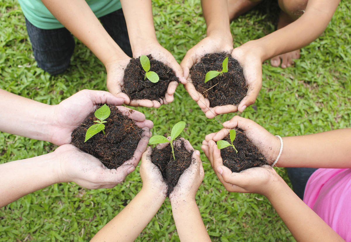 Planting the Seeds of the Future