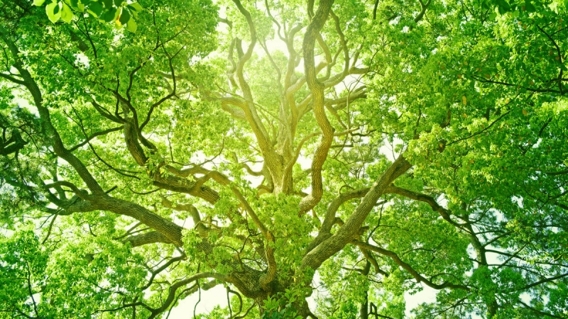 Sustainable Living to Save the Earth