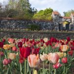 "Take a Road Trip to Visit the Biltmore Blooms and ""Designed for Drama"" 3"