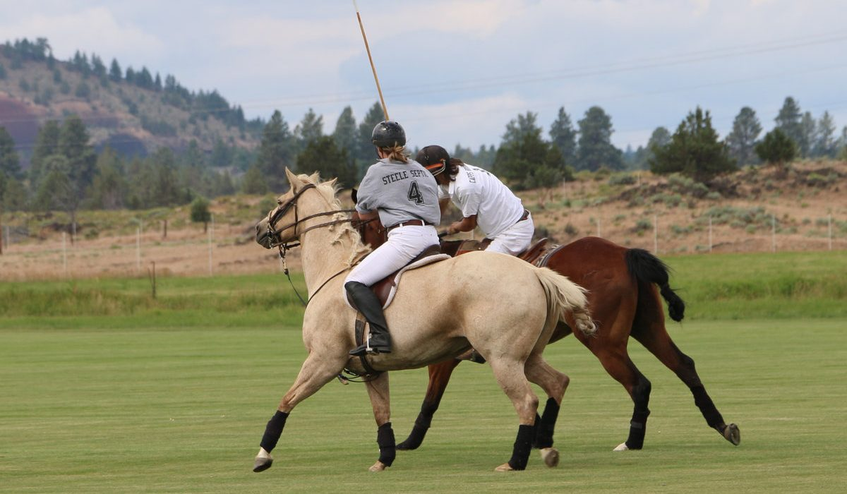 This Isn't Your Monarchy's Polo 5