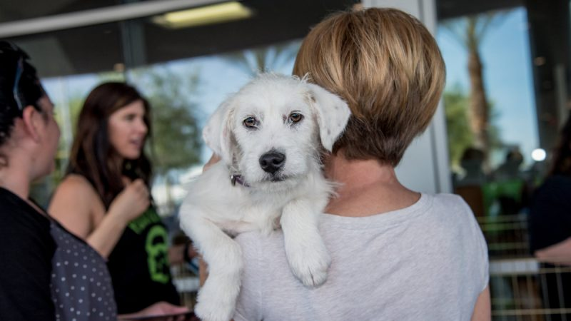Chapman BMW Hosts PAW-ty Adoption Event 5