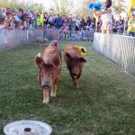 The 29th Annual Chandler Ostrich Festival 2