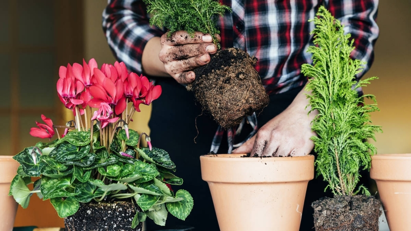 Gardening to Improve your Health 1