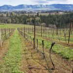 Columbia Gorge Wine Country 5