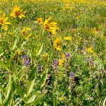 Bogus Basin Blooms with Summer Recreation 2