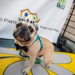 Fourth annual Paws and Pints La Jolla 8