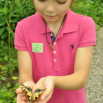 Butterfly Magic at Ladew Gardens 6