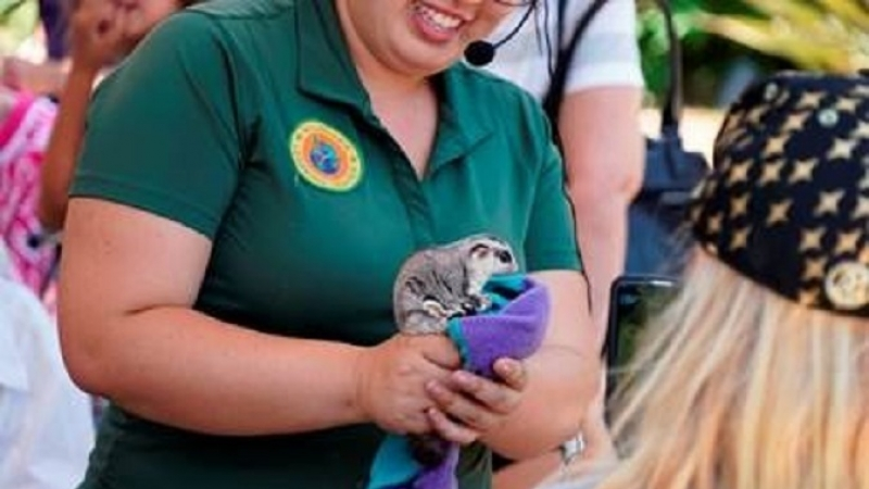Pirates, Exotic Animals Steal the Show at University Village Family Day 2