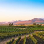 For the Love of Wine: Santa Ynez Valley Vintners Score Points with World-Class Wines 4