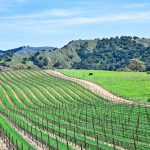 For the Love of Wine: Santa Ynez Valley Vintners Score Points with World-Class Wines 3