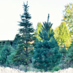 Magical Holiday Memories: Medina Tree Farm 2