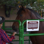 Colorado Horse Rescue's Mane Event 1