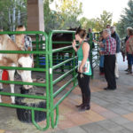 Colorado Horse Rescue's Mane Event