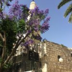Israel: The Land of Milk and Honey 5
