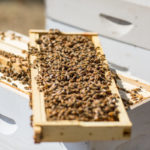 Bee-Cause they Can 7