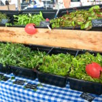 Franklin Farmer's Market Ensures a Sustainable Future 1