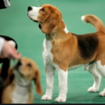 Dog Show is a Pet Lover's Dream 2